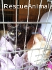 Mother & Son cats need home together
