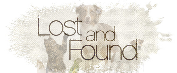 Lost and found pets Ireland